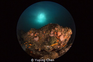 Cold and colorful/Aliwal Shoals,Durban,South Africa/Canon... by Yuping Chen